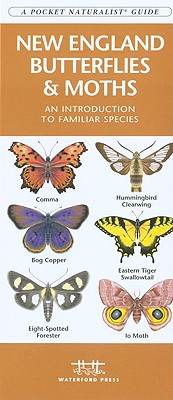 New England Butterflies & Moths By Kavanagh, James/ Leung, Raymond (ILT)